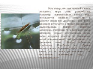 Роль поверхностных явлений в жизни животного мира очень разнообразна. Наприм