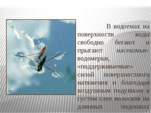 В водоемах на поверхности воды свободно бегают и прыгают насекомые- водомерк