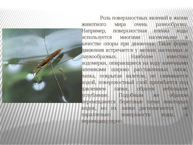 Роль поверхностных явлений в жизни животного мира очень разнообразна. Наприм...