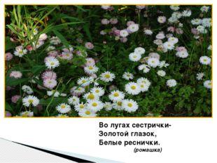 Во лугах сестрички- Золотой глазок, Белые реснички. (ромашка)