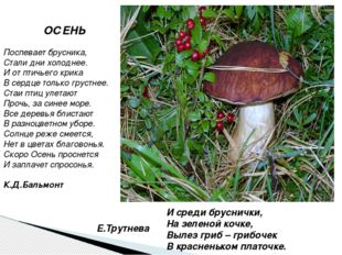 И среди бруснички, На зеленой кочке, Вылез гриб – грибочек В красненьком плат