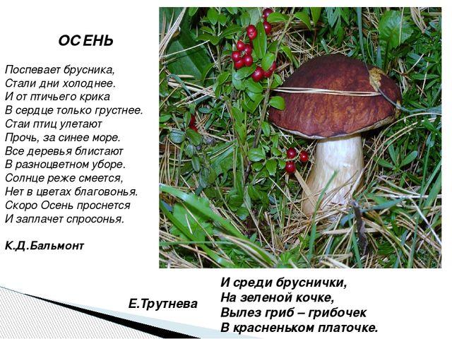 И среди бруснички, На зеленой кочке, Вылез гриб – грибочек В красненьком плат...