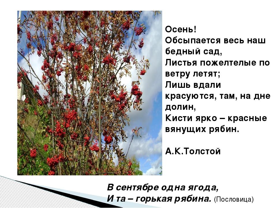 Осень! Обсыпается весь наш бедный сад, Листья пожелтелые по ветру летят; Лишь...