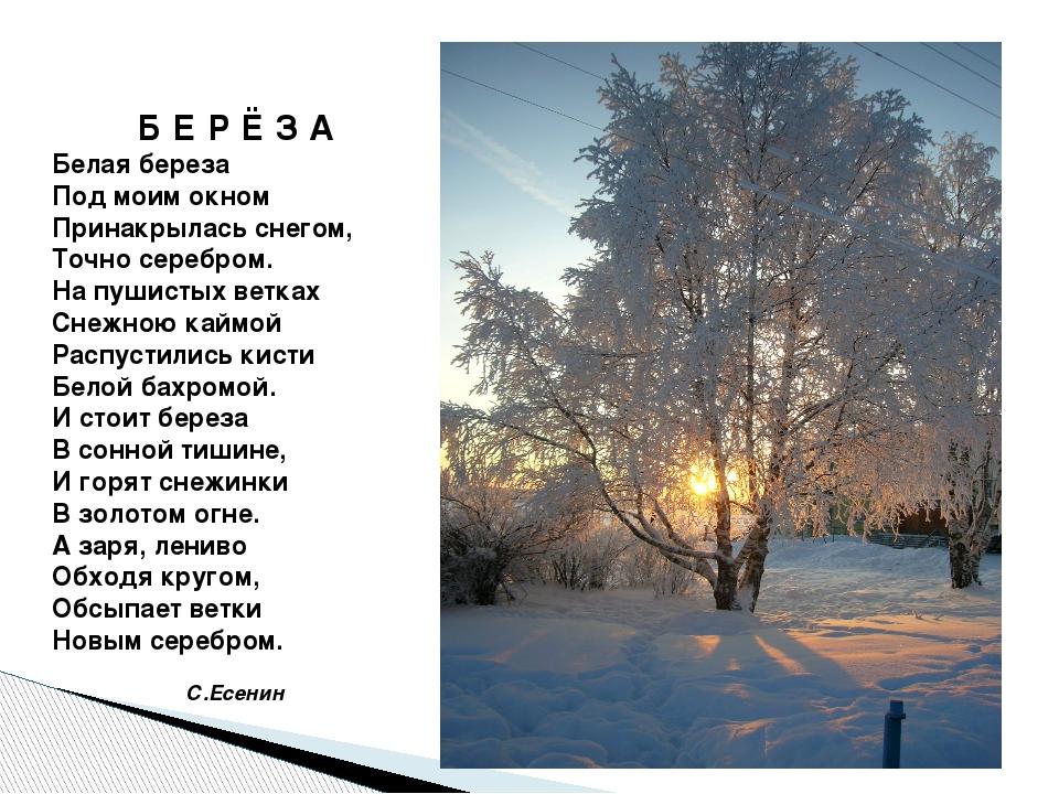 Б Е Р Ё З А Белая береза Под моим окном Принакрылась снегом, Точно серебром....