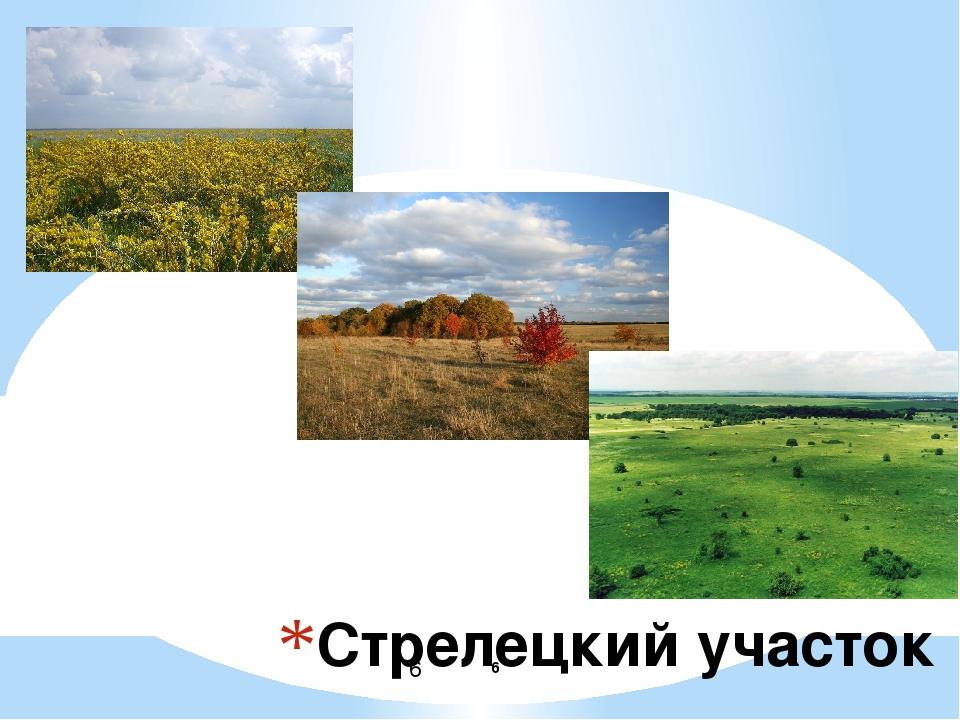 Стрелецкий участок