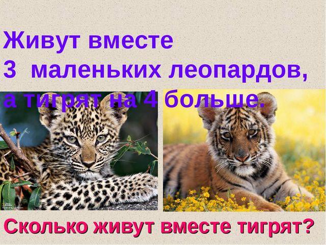 Сколько живут вместе тигрят? Живут вместе 3 маленьких леопардов, а тигрят на...