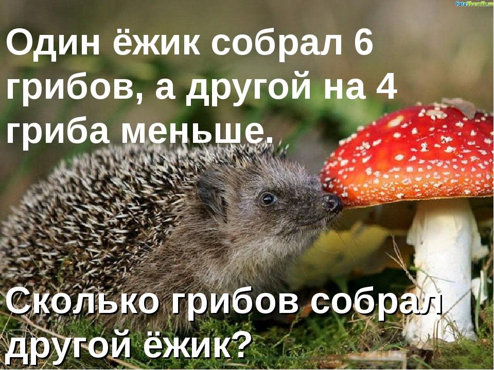 Один ёжик собрал 6 грибов, а другой на 4 гриба меньше. Сколько грибов собрал...