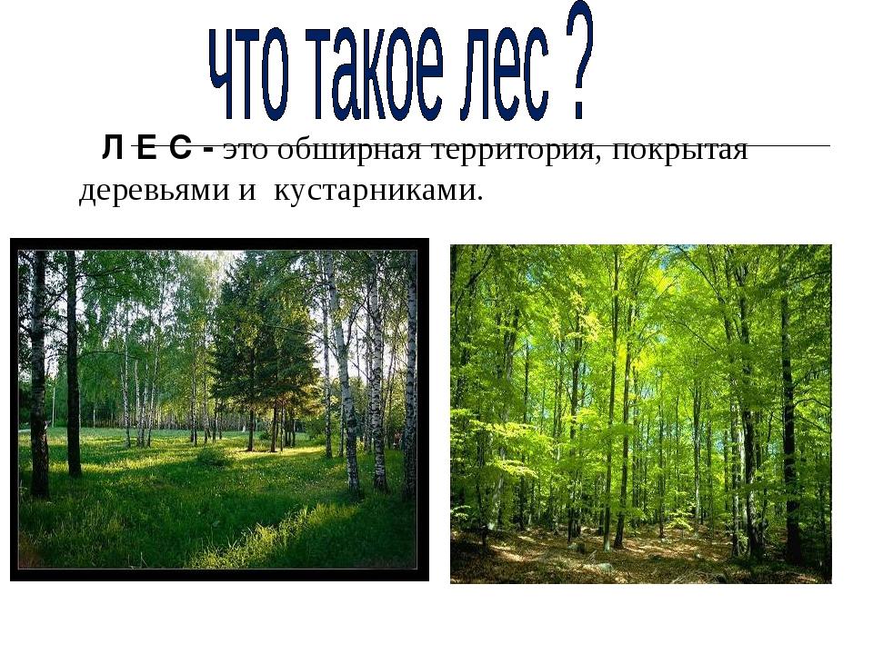 Л Е С - это обширная территория, покрытая деревьями и кустарниками.