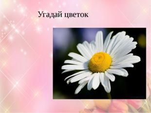 Угадай цветок Ромашка