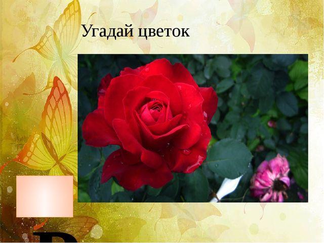 Угадай цветок Роза