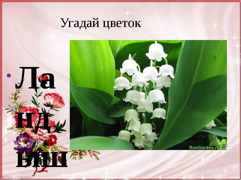 Угадай цветок Ландыш