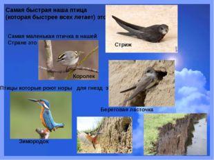 Самая быстрая наша птица (которая быстрее всех летает) это Стриж Самая малень