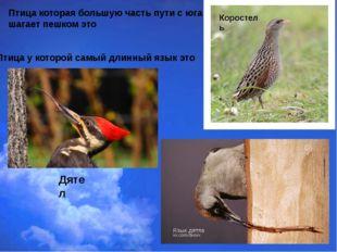 Птица которая большую часть пути с юга шагает пешком это Птица у которой самы