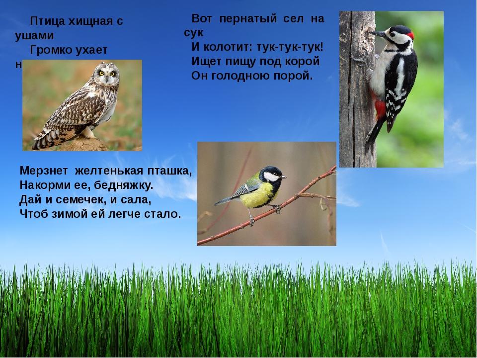 Птица хищная с ушами Громко ухает ночами. Вот пернатый сел на сук И колотит:...
