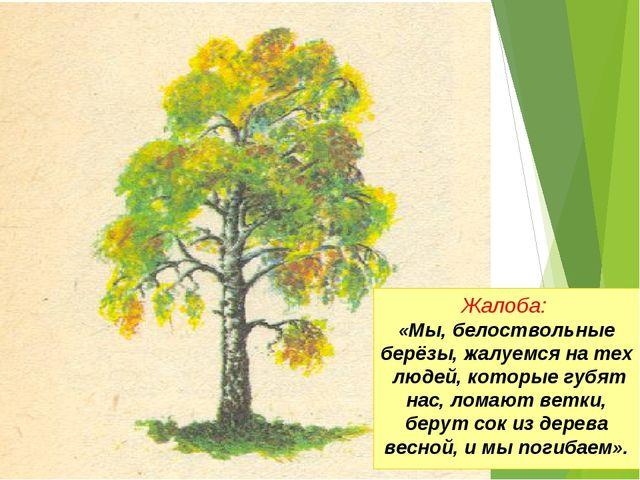 Жалоба: «Мы, белоствольные берёзы, жалуемся на тех людей, которые губят нас,...