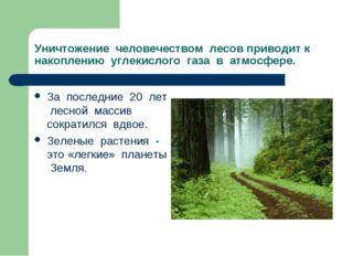Уничтожение человечеством лесов приводит к накоплению углекислого газа в атмо