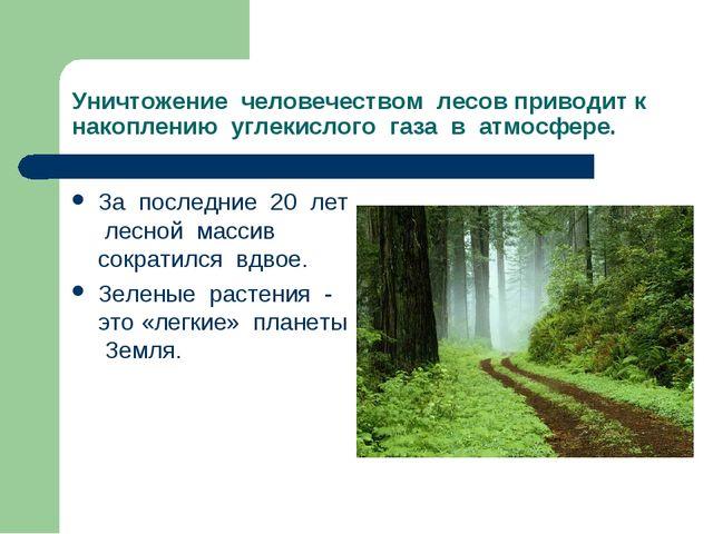 Уничтожение человечеством лесов приводит к накоплению углекислого газа в атмо...