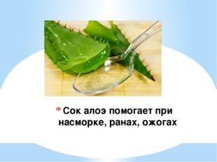 Сок алоэ помогает при насморке, ранах, ожогах