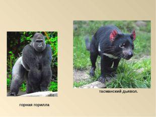 тасманский дьявол. горная горилла