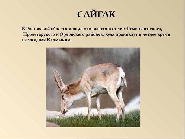 САЙГАК В Ростовской области иногда отмечается в степях Ремонтненского, Проле...