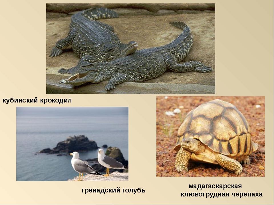 кубинский крокодил мадагаскарская клювогрудная черепаха гренадский голубь