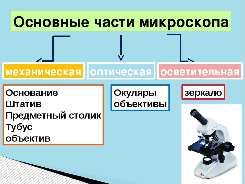 Основные части микроскопа механическая Основание Штатив Предметный столик Туб...