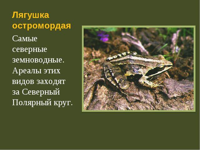 Лягушка остромордая Самые северные земноводные. Ареалы этих видов заходят за...