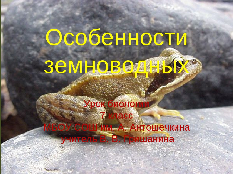 Особенности земноводных Урок биологии 7 класс МБОУ СОШ им. А. Антошечкина учи...