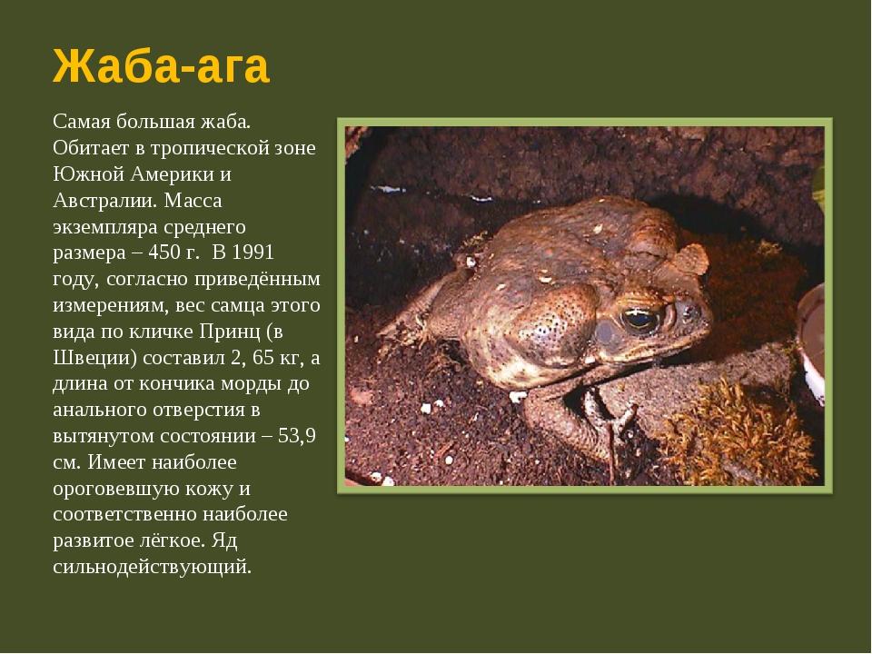 Жаба-ага Самая большая жаба. Обитает в тропической зоне Южной Америки и Австр...