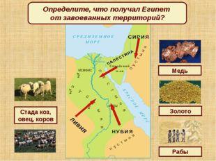 Определите, что получал Египет от завоеванных территорий? Золото Медь Стада к