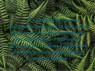 К настоящему времени сохранилось примерно 12 тыс. видов папоротников, распр