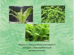 Многие из этих растений используют в медицине и фармацевтической промышленнос