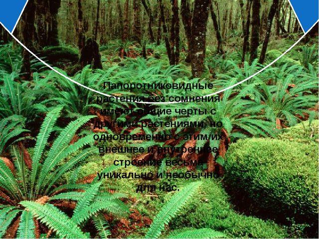 Папоротниковидные растения без сомнения имеют общие черты с другими растения...