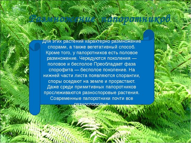 Для этих растений характерно размножение спорами, а также вегетативный способ...