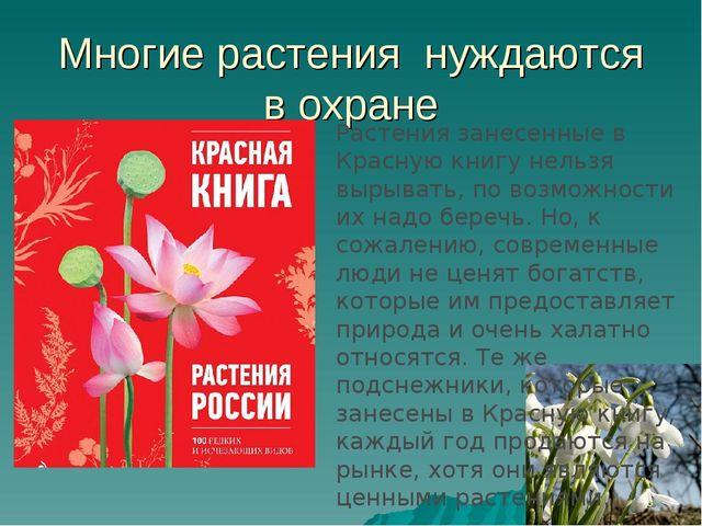Многие растения нуждаются в охране Растения занесенные в Красную книгу нельзя...