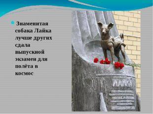 Знаменитая собака Лайка лучше других сдала выпускной экзамен для полёта в ко
