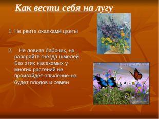 Не рвите охапками цветы 2. Не ловите бабочек, не разоряйте гнёзда шмелей. Без