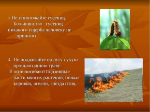 3. Не уничтожайте гусениц. Большинство гусениц никакого ущерба человеку не пр