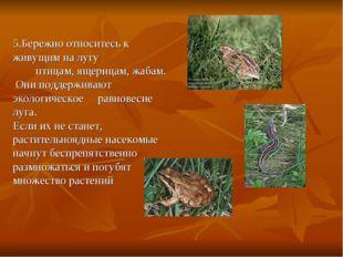 5.Бережно относитесь к живущим на лугу птицам, ящерицам, жабам. Они поддержив
