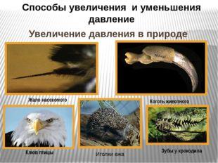 Увеличение давления в природе Жало насекомого Способы увеличения и уменьшения