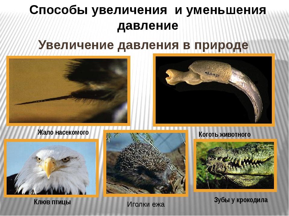 Увеличение давления в природе Жало насекомого Способы увеличения и уменьшения...