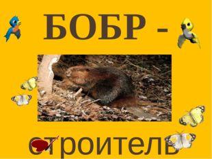 Бобры – одни из самых крупных грызунов на земле. По весу они занимают второе