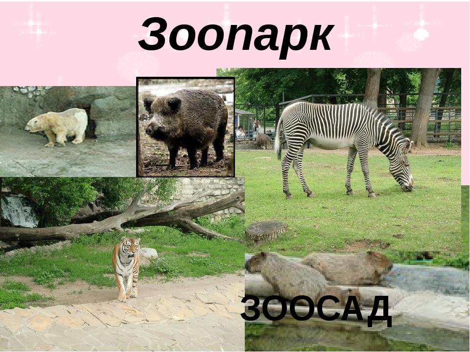 Зоопарк ЗООСАД