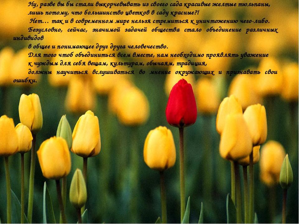 Ну, разве вы бы стали выкорчевывать из своего сада красивые желтые тюльпаны,...