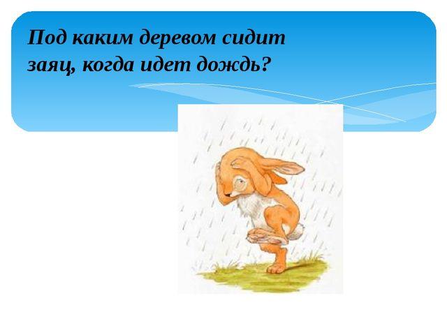 Под каким деревом сидит заяц, когда идет дождь?