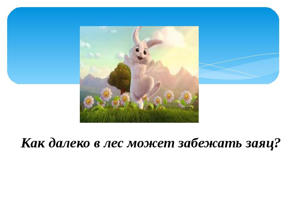 Как далеко в лес может забежать заяц?