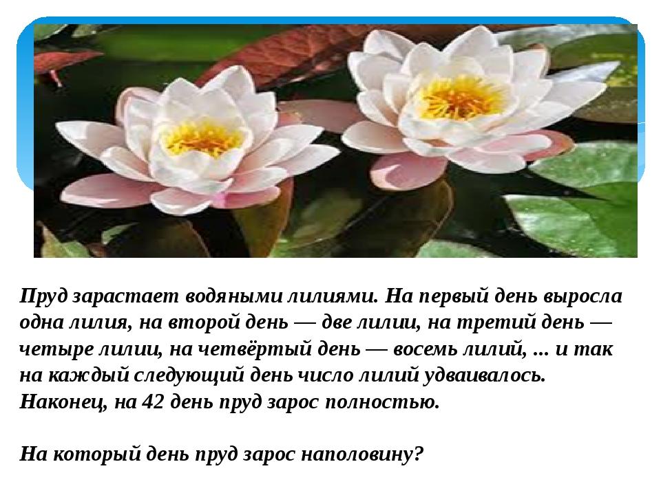 Пруд зарастает водяными лилиями. На первый день выросла одна лилия, на второ...