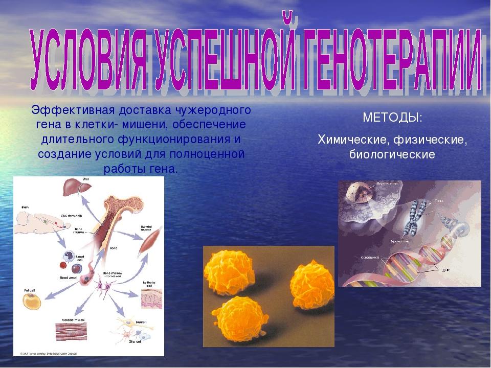 Эффективная доставка чужеродного гена в клетки- мишени, обеспечение длительно...