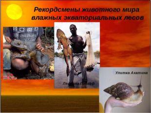 Рекордсмены животного мира влажных экваториальных лесов Лягушка Голиаф Улитка
