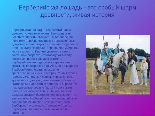 Берберийская лошадь - это особый шарм древности, живая история Берберийская л...